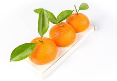 buche-de-noel-2016-buche-la-plus-fruitee-karamel-paris